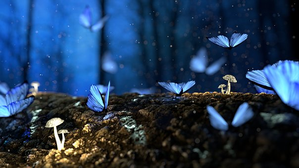 dreams butterflies